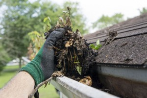 44096729 - cleaning gutters during the summer time.